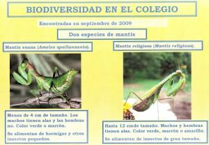 Biodiversidad en el colegio.